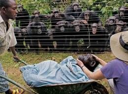 Chimp Funeral photo
